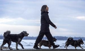 Förbättra din hunds livskvalité med massage